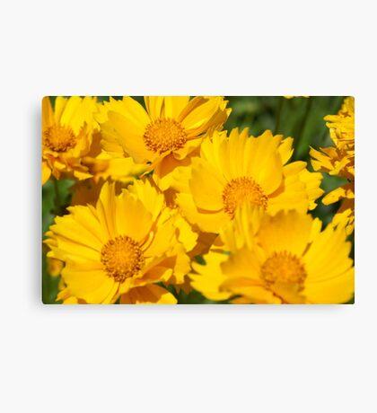 Yellow Sunshine Canvas Print