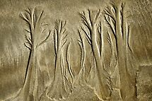 Forest In The Sand by Susie Peek