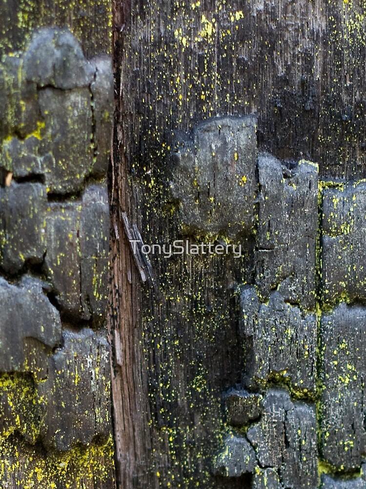 Burnt Wood iPhone Case by TonySlattery