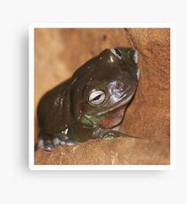 brown froggy Canvas Print
