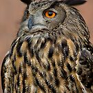 European Eagle Owl  by Daniel  Parent