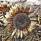 Vintage Sunflower artwork #1 by Nhan Ngo