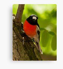 """Scarlet Robin"" Canvas Print"