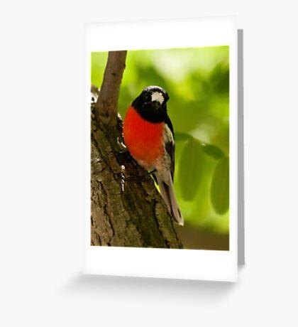 """Scarlet Robin"" Greeting Card"