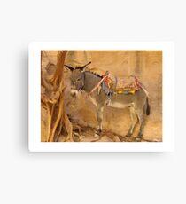 Donkey at Petra Canvas Print