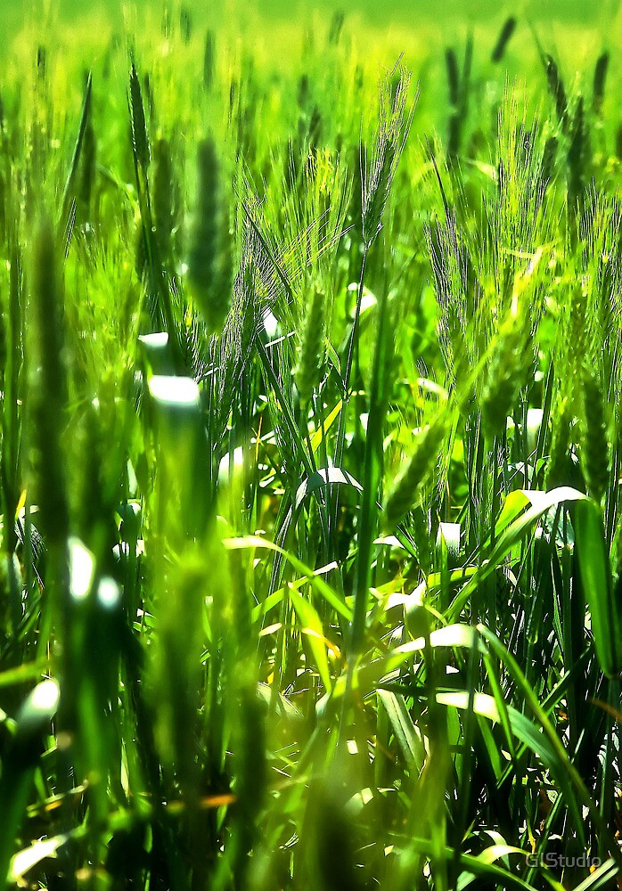 Fields of Green by GIStudio