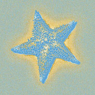 Starfish by Degroom