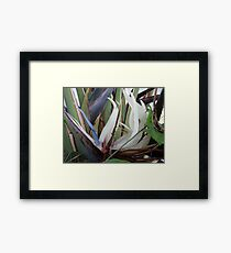 Tropical Blossom In The Winter - Flor Tropical En El Invierno Framed Print