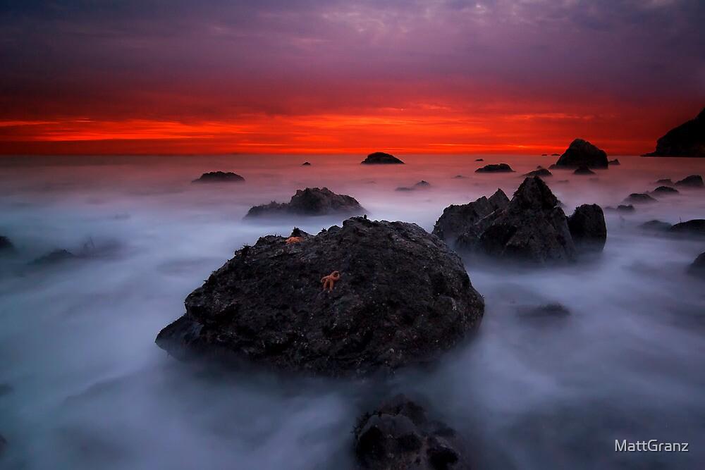 Starfish by MattGranz