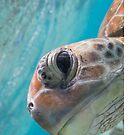 Peekaboo turtle by Kara Murphy