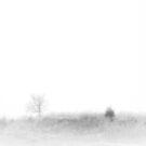 Fogged Field by Ryan Smith
