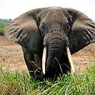 Elephant On Patrol by Stephen Monro