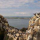 Birding paradise by almaalice