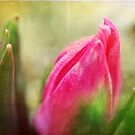 Spring Warmth by Astrid Ewing Photography