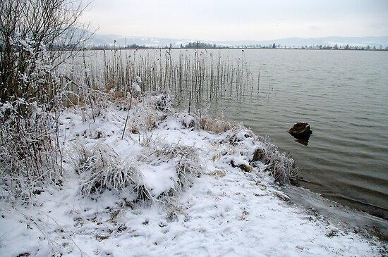 winter scene 1 by Daidalos