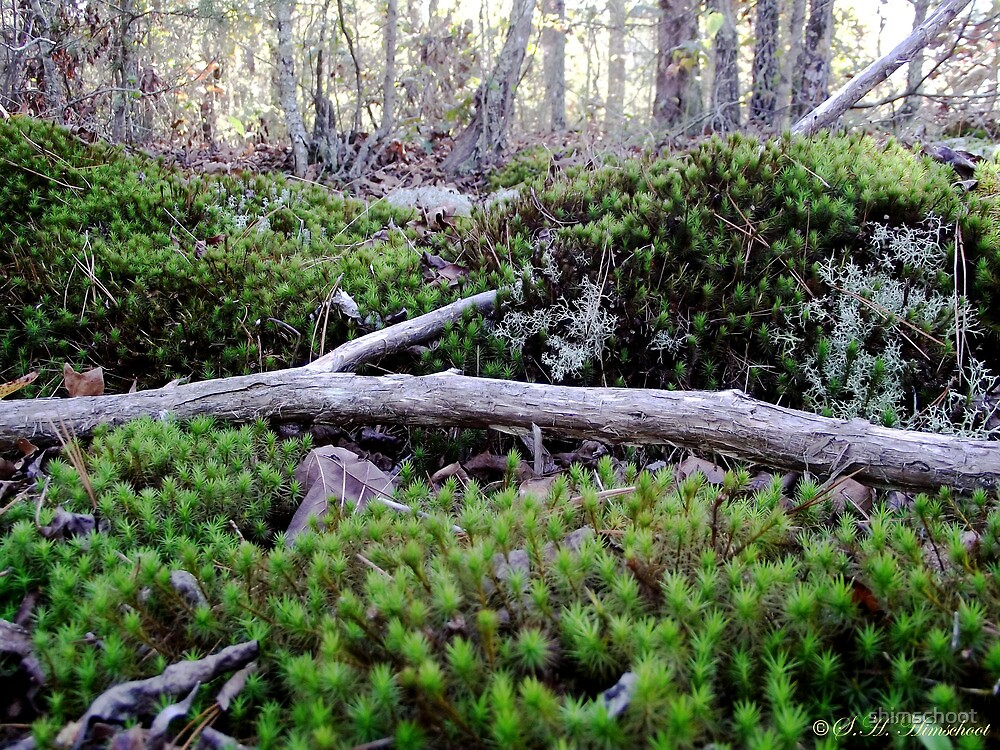Lying in the Moss by shimschoot