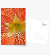 Amaryllis Postcards
