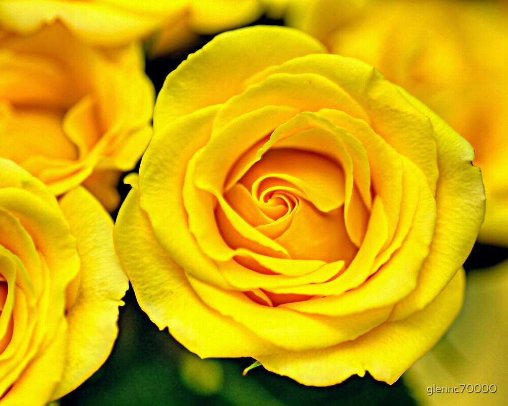 Outstanding Rose - Textured by glennc70000