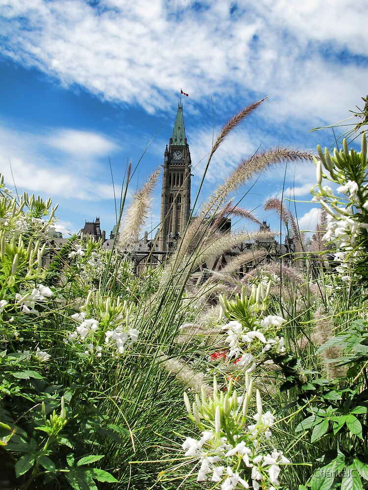 Decorative Fountain Grass & White Flowers in front of the Peace Tower, Parliament Hill, Ottawa, Canada by Chantal PhotoPix