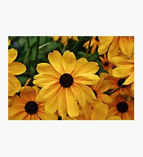 Yellow Daisies  Photographic Print