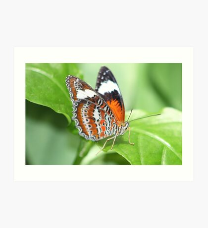 Another Butterfly in Cairns Art Print