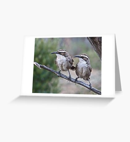 White browed-Babblers Greeting Card