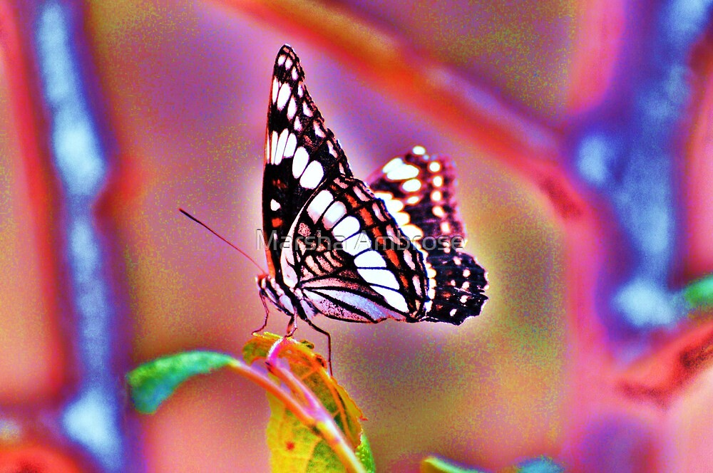Mariposa  by Marsha Ambrose