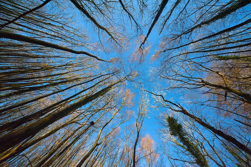 Tree Canopy Convergence by Crispel