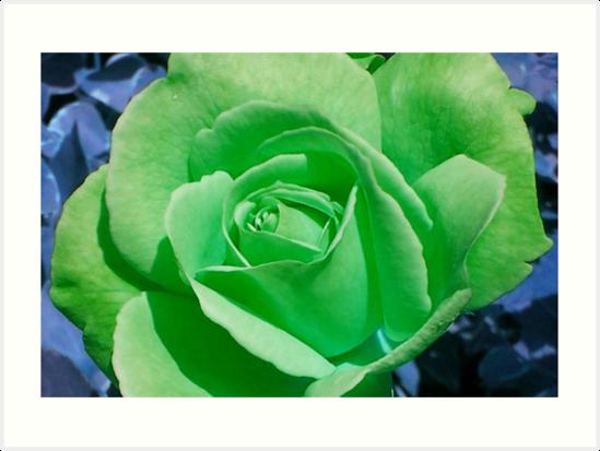 Cheerful Green von G.T.S Photos