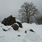 Winter Snow by Brian Kerr