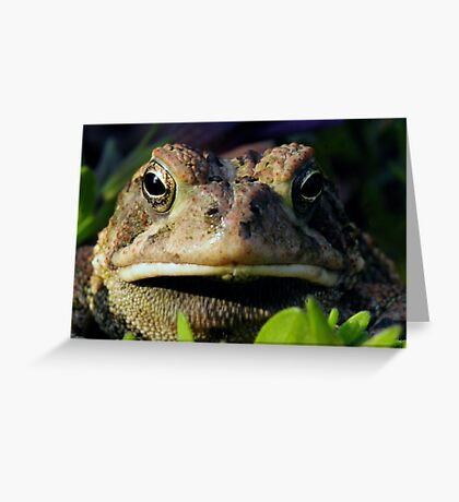 """Ribbett"" Greeting Card"