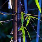 Bamboo by jesskato