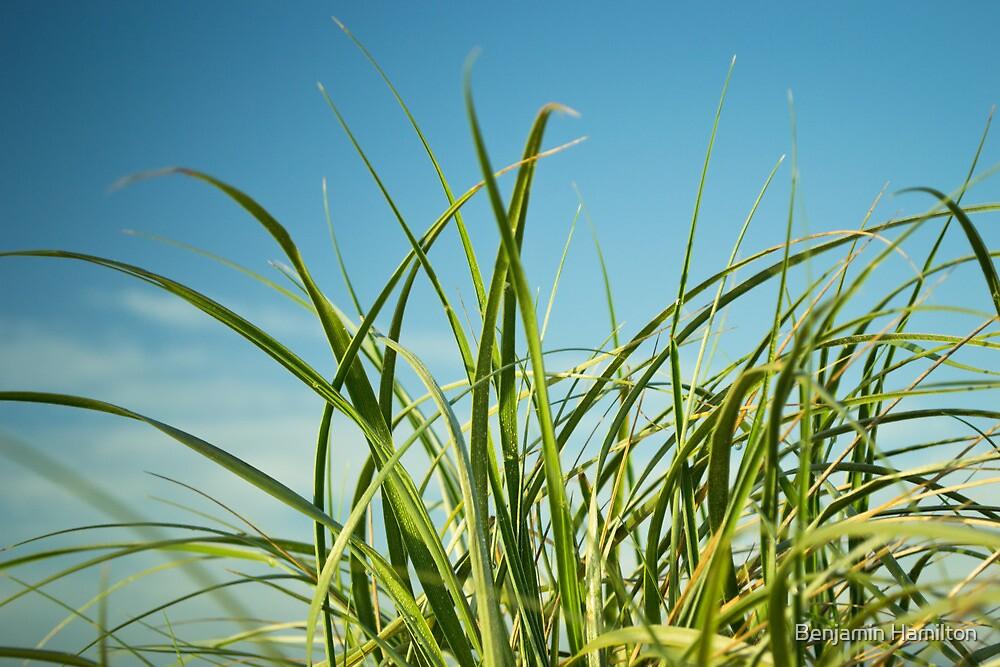Grassy by Benjamin Hamilton