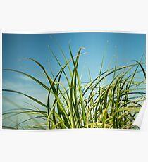 Grassy Poster