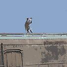 River guard by smashempo