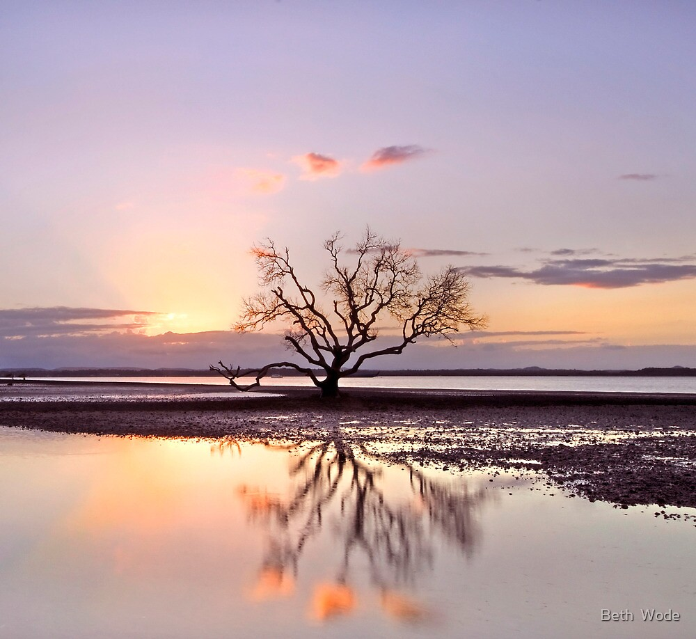 The Summer Tree - Victoria Pt Qld Australia by Beth  Wode