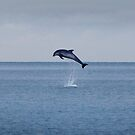 Killiney Dolphins by orourke