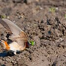 A Small Window Of Opportunity - The Cliff Swallow by DigitallyStill