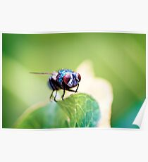 Macro fly Poster