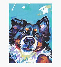 Bernese Mountain Dog Bright colorful pop dog art Photographic Print