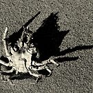 Crab by Jean-Luc Rollier