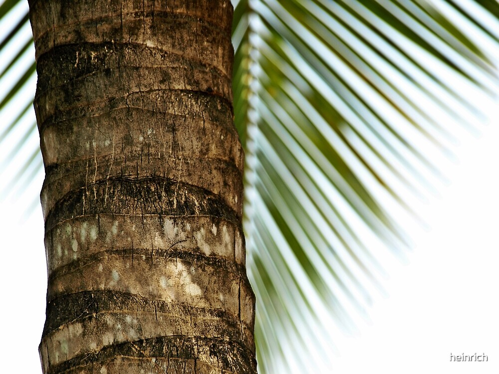 Palmtree by heinrich