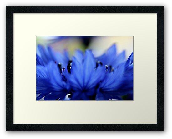 Blue flower by Christina M. Munich