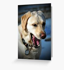 Lucca Greeting Card