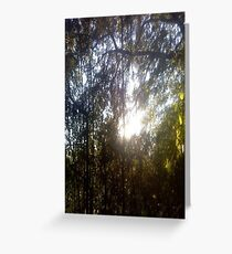 Forest/Woods Greeting Card