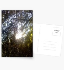 Forest/Woods Postcards