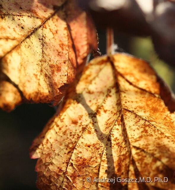 @ @ @  . Wonderful Autumn  lights .  By Brown  Sugar. Views (127) Thx! by © Andrzej Goszcz,M.D. Ph.D