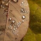 Rainy & Beautiful II  by vbk70