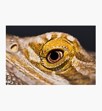Bearded Dragon. Photographic Print