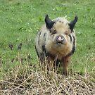 Little piggy by Meladana